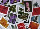Foto-Grußkarten