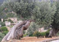 Karte mit Umschlag - Olive (a)